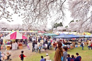 第28回沼田公園桜まつり